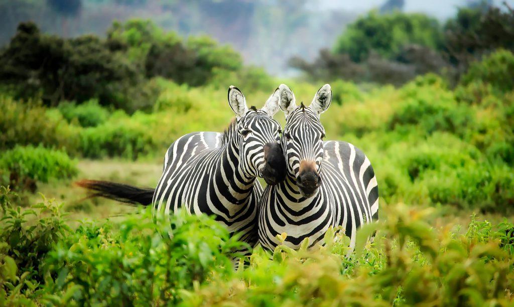 wildlife hotel experience